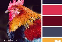 colour/paint / by michael fockedey