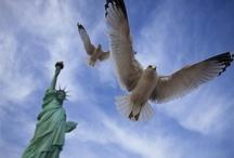 America The Beautiful / by Barbara