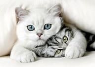 Cute!!!! / by Hua Jia Yu