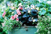 gardening / by Shirl Mabary