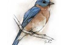 Voëls / Birds / by Naomi le Roux