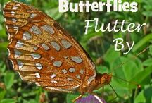 NE - Butterflies Flutter By / Here are some fun ideas to enhance the NaturExplorers Butterflies Flutter By study! / by Our Journey Westward
