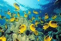 ocean life / by Cindy Stock