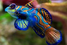 FISH/OCEAN ANIMALS / by Marcia Kiger
