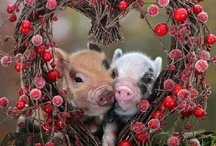 Piggies / by Stacie Hatfield