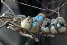 Birds / by Sajad Haider