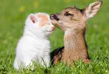 Cute Animals and Animal friendships / by Kristen Toole