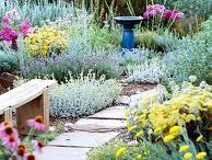 Gardens and Pretty Flowers...... / flowers / by Sharon Cupelli
