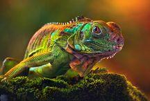 Amphibians & Reptiles / by Shar Lynn
