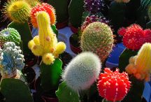 Succulents&Cacti / by Douglas&Colette Dacres