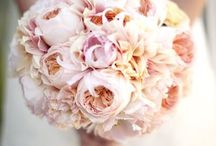 Blush Pink Wedding / by Party Pieces