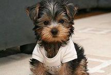 I want one!!! / by Princess Onyinye Akujuo
