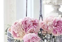La Patissere / French Style Shoot Inspiration Board / by Niche Events