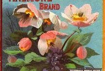 Vintage printable flowers, berries, fruits / Violets and pansies are in their own board / by Anna Tuomisalo