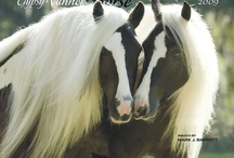 All The Pretty Horses - Gypsy Vanners! / by Gail Pate
