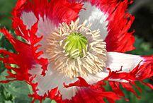 Garden and Flowers / by Crimson Raen