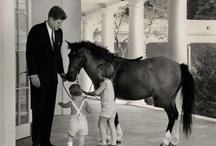 Horsies / Horses / by K.C. Hopkins-Braggs