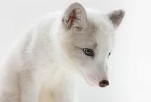 Animal Portraiture / by Michael Winokur