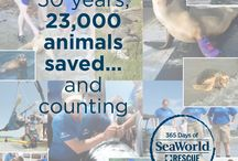 365 Days of SeaWorld Rescue / by SeaWorld