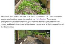 Gardening tips / by Jan MacKay
