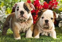 MsD's Bulldogs / by Ms Daiquiri