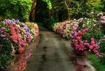 Garden / by Agi Mano