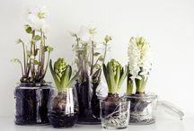 garden - indoors / by Arwen King