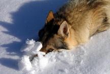 kitties and wolvies / by Sherry Esphandiari