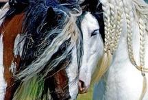 Horses and Donkeys - I love them!!! / by Kate Edwards