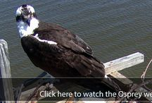 Wildlife Cams and Videos / by Chesapeake Bay Trust