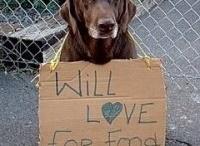 Dog Gone It / by JoAnn Dusing