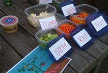 1st Grade Science: Plants / by Shannon King