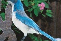 Birds / by Elaine Baker