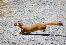 Wildlife / by Point Reyes National Seashore Association