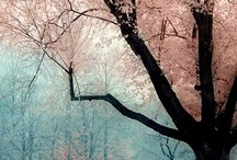 love trees / by Paloma Caldera