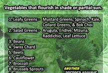 Plant it, grow it, preserve it, eat it. / by Airan Scruby-Miller
