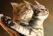 It Takes ~*TWO*~ / Sweet moments of animal buddies :-) / by Fiona*ღ ~