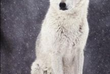 Animal Totems:  White Wolf / by Sandy Meadors