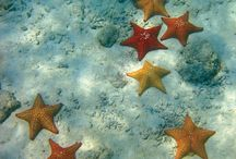 Under The Sea / by Mary Mitchell