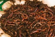 Composting for beginners / by Gabriela Bradt