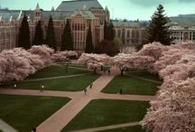 Colleges / by Jonathan Reingold