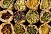 healing herbs / by Daisy Howard Kimbro