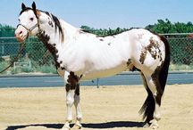 ♪Paint & Pinto Horses / by Audrey Merchant
