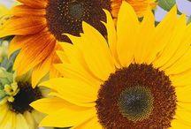 Floral Goodness / by Vicki Stys