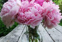 Flowers / by Audrey Sue Capp