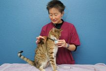 Sit! Stay! Purr! - Animal Behavior / by Shelter Medicine