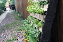 garden ideas  / by Rebecca Astwood