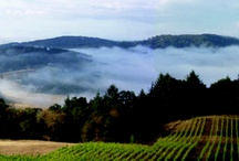 Oregon Wine is Awesome! / In Oregon's Willamette Valley, we make great Pinot Noir, but also great Pinot Gris, Reisling, Burgundian-style Chardonnay, Gerwertztraminer and so much more! / by Chehalem Ridge B&B
