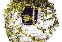 Garden ideas / by Vicky Caird