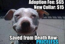 NYCACC Death Row Dogs And Cats / THIS IS ABSOLUTELY DISGRACEFUL - TO HAVE THIS GO ON IN OUR COUNTRY!  WHERE IS COMPASSION AND RESPECT FOR LIFE?  / by Nicole Souders